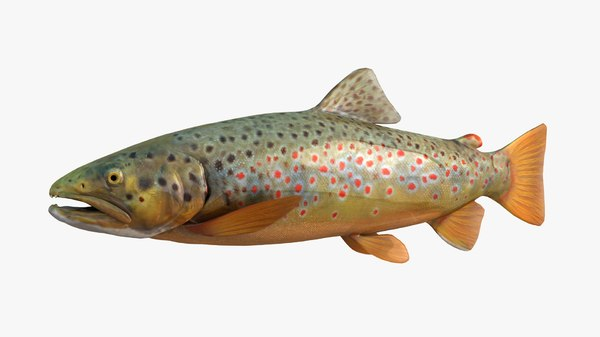 brown trout 3D model
