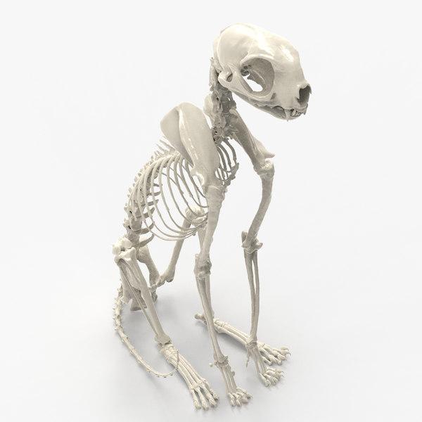 cat skeleton 3D model
