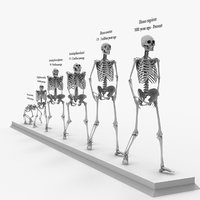 3D skeleton evolution darwin