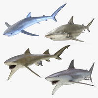 rigged sharks 2 3D