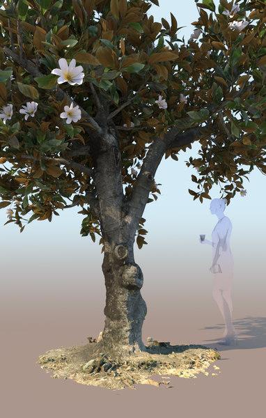 3D flowering ficus tree nitida model