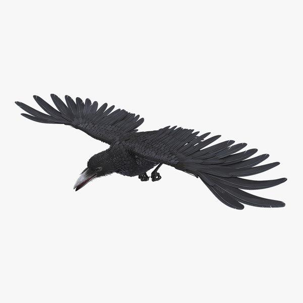 raven flying rigged flight animation model