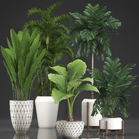 houseplants exotic plants 3D