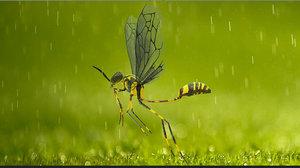 3D wasp basic rig