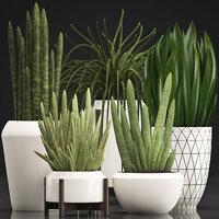 exotic plants sansevieria 3D model