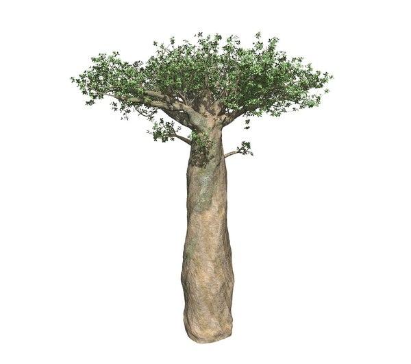 baobab model