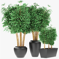 3D plant bamboo exotic model