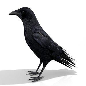 3D model crow