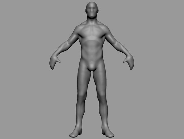 3D base anatomy