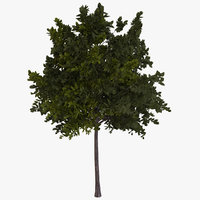 generic green tree 3D model