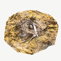 Nest With an Egg