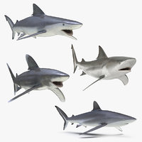 rigged sharks 3 3D