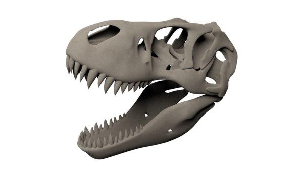 3D tyrannosaurus rex skull