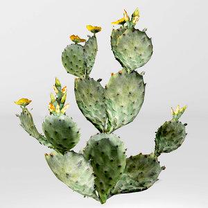 3D model cactus prickly pear