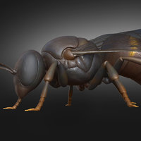 honey bee insect animal creature 3D model