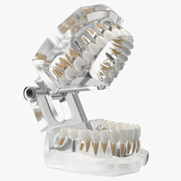 3D transparent dental typodont implants