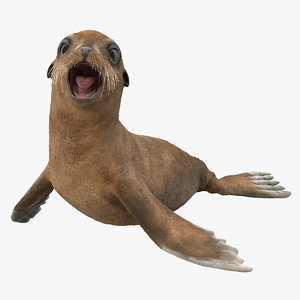 3D baby sea lion rigged