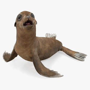 baby sea lion seating 3D model