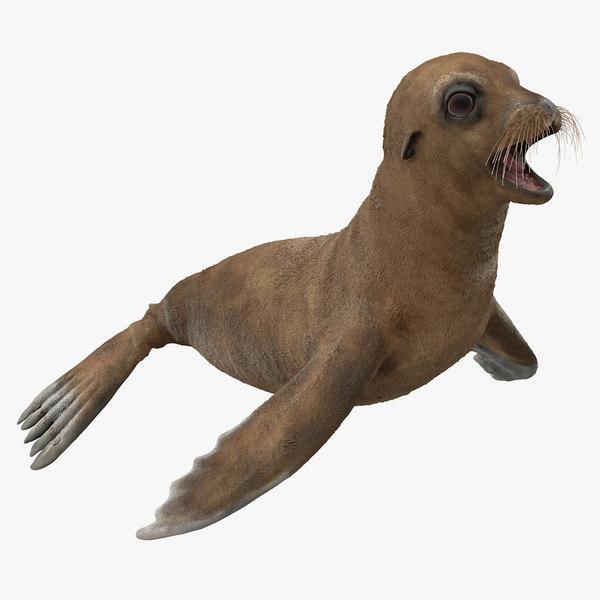 3D baby sea lion t-pose model