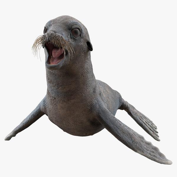 3D sea lion wet neutral model
