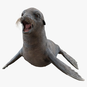 3D sea lion wet neutral model