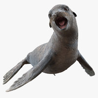 sea lion wet rigged 3D