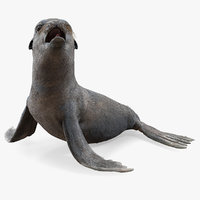 sea lion wet seating model