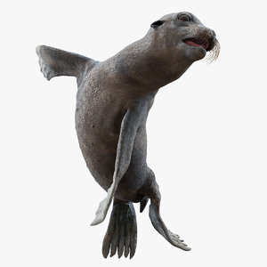 wet sea lion swimming 3D