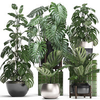 Collection Exotic plants Monstera 2