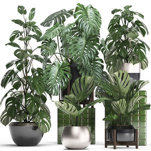 monstera plants exotic 3D