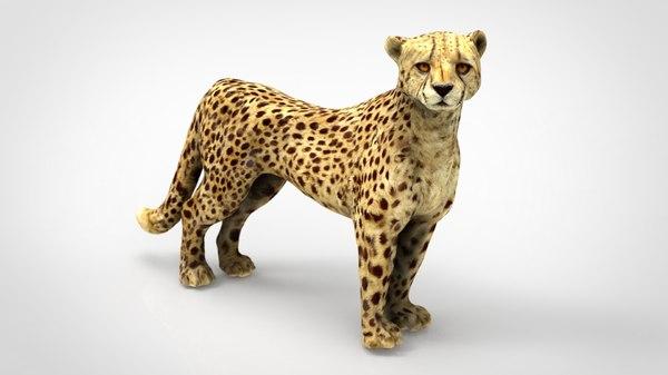 3D cheetah leopard mammal