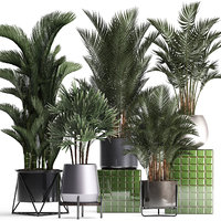 houseplants exotic plants 3D