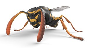 3D low-poly wasp