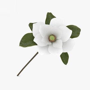3D magnolia flowers plant