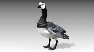 barnacle goose model