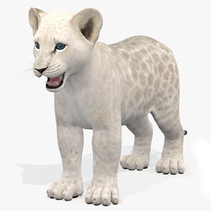 lion cub white modeled 3D model