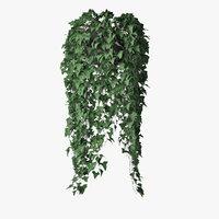 Ivy in pot 08