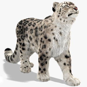 3D snow leopard furry fur animal