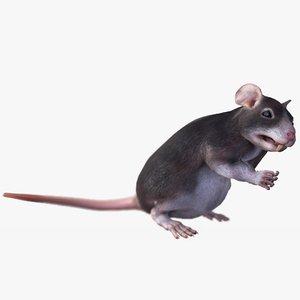 3D brown rat 5