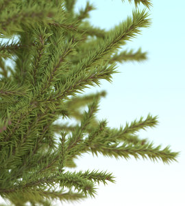 fir needles-geometry model
