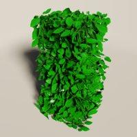 fagus sylvatica plant gardens model