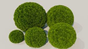 3D thuja occidentalis globosa model