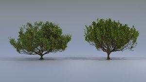 3D coniferous tree
