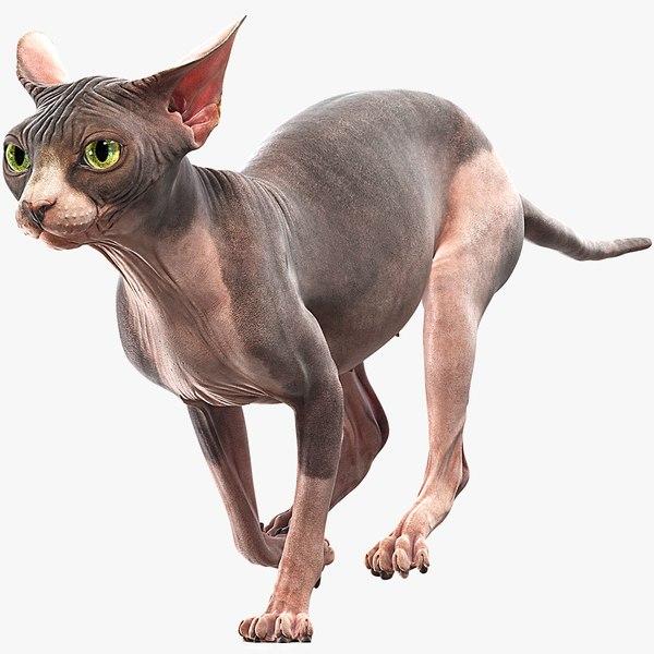 sphynx cat animations 3D