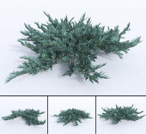3D creeping juniper blue chip