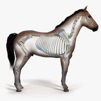 3D skin horse skeleton