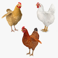3D chickens white brown model