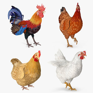 rigged rooster chickens 3D