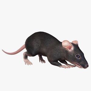 brown rat common 6 3D model