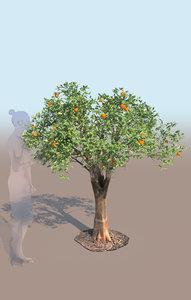 3D mandarin tree citrus reticulata
